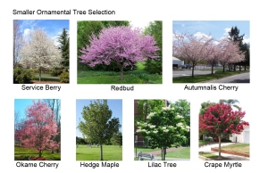 Ornamental Tree Board