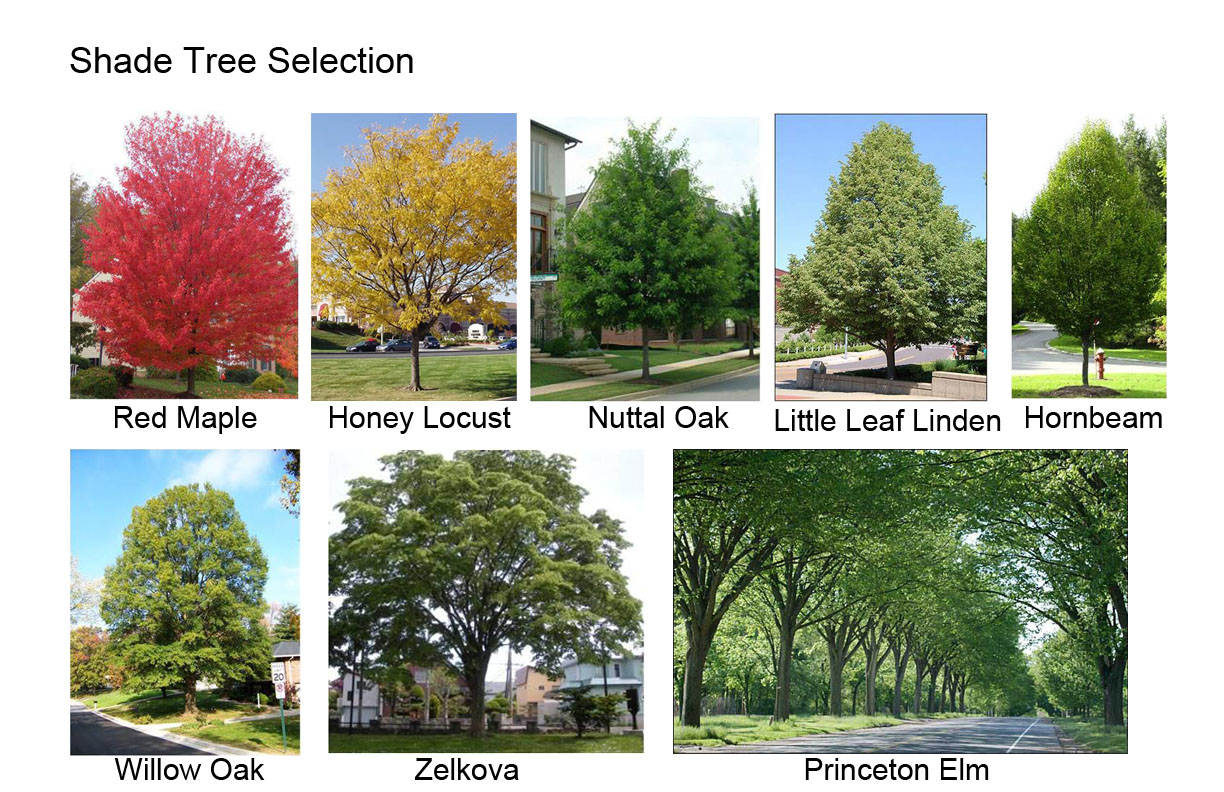 Names Of Shade Trees 28 Images Shade Trees For Small