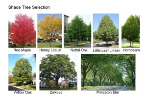 Shade Tree Board